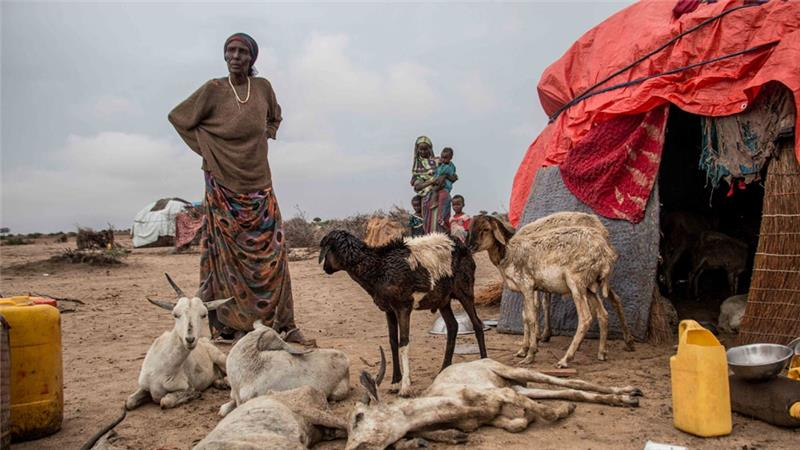Drought in Somalia What are we waiting for? NGOs Call for Action