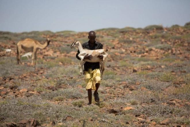 FAO reaches milestone in massive famine-prevention campaign in Somalia
